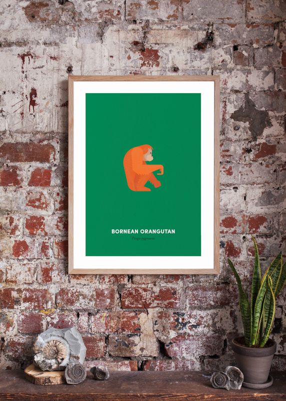 Orangutan White Wall Product Shot Cropped