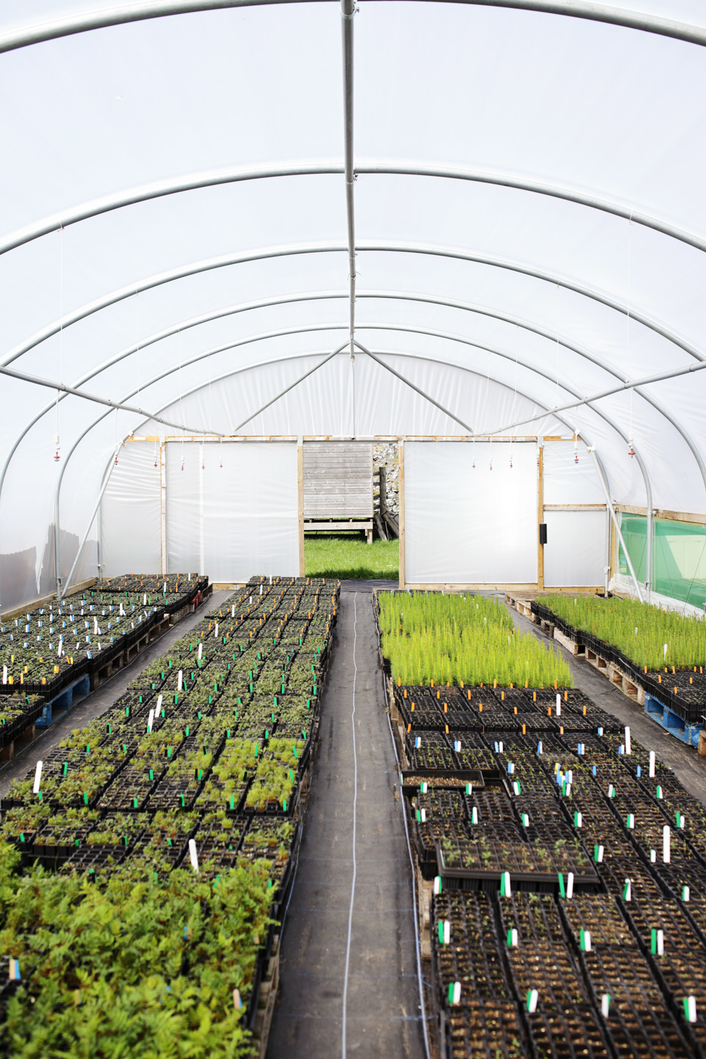 Grid One Poly Tunnel Wide