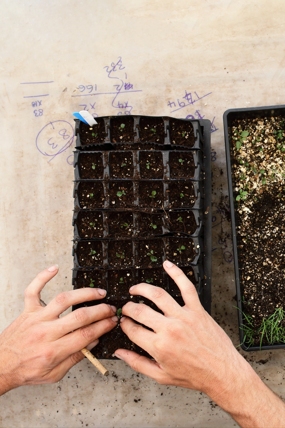 Grid One Picking Out Seedlings